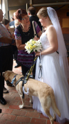 Bride with her guide dog