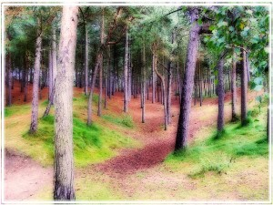 Enchanted woodland